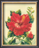 Red Hibiscus Prints by Ted Mundorff
