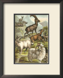Goats Posters by Henry J. Johnson