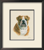 English Bulldog Posters by Judy Gibson