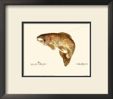Brown Trout Prints by Teri Renee Blehm