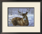 Through My Window: Whitetail Deer Poster by Joni Johnson-godsy