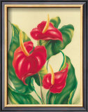 Anthurium II Posters by Ted Mundorff