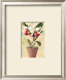 Potted Cattleya Poster by Walter Robertson