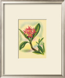 Plumeria Posters by Ted Mundorff