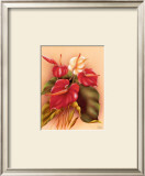 Red and White Anthuriums Poster by Frank Oda