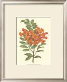 Bountiful Garden III Print