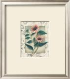 Echinacea Posters by Julie Nightingale