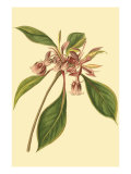 Tropical Ambrosia III Poster von Sydenham Teast Edwards