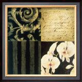 Orchid Sketch II Prints by Elizabeth Jardine