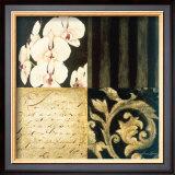 Orchid Sketch I Poster by Elizabeth Jardine