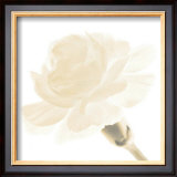 Carnation I Prints by George Fossey