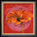 Zinnia Orange sur Pos Rose Posters by Valerie Roy