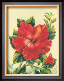 Red Hibiscus Framed Giclee Print by Ted Mundorff