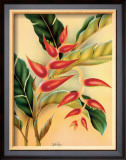 Heliconia Framed Giclee Print by  Hale Pua Studio