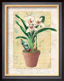 Potted Cymbidium Posters by Walter Robertson