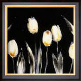 Succulent Tulips Prints by Cheryl Roberts