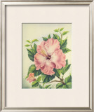 Pink Hibiscus Framed Giclee Print by Ted Mundorff