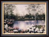 White Birches Posters by Diane Romanello