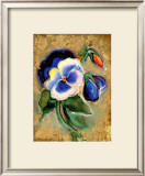 Pansy Framed Giclee Print by Marcella Rose