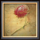 Little Strawflower Prints by Sally Wetherby