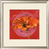 Zinnia Orange sur Pos Rose Poster by Valerie Roy