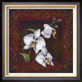 Orchid Study I Art by Thomas Wood