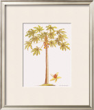 Papaya Tree Framed Giclee Print by Georg Dionysius Ehret