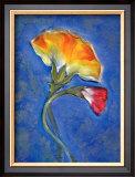 Carnation Framed Giclee Print by Marcella Rose