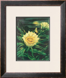 Blooming Cereus with Full Moon Framed Giclee Print by Ted Mundorff