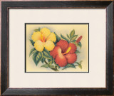 Hawaiian Hibiscus Framed Giclee Print by Eve Hawaii
