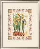 Provincial Narcissus Prints by Walter Robertson