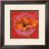 Zinnia Orange sur Pos Rose Posters by Valerie Roy