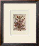 Twelve Months of Flowers, 1730, February Prints by Robert Furber