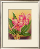 Cattleya Prints by Hale Pua Studio