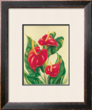Anthurium II Framed Giclee Print by Ted Mundorff