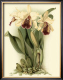 Dramatic Orchid II Prints by J.k. Mosferlander