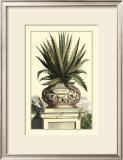 Antique Munting Aloe I Prints by Abraham Munting