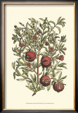 Pomegranate Tree Branch Posters by Henri Du Monceau