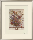 Twelve Months of Flowers, 1730, February Posters by Robert Furber