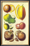 History of the Vegetable Kingdom I Print by William Rhind