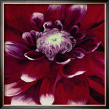 Red Dahlia Prints by Beth Winslow