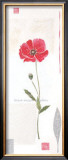 Cotton Poppy Print by Catherine Denolly