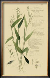 Ornamental Grasses IV Poster by A. Descubes