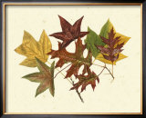 Tulip Tree, Sweet Gum and Scarlet Oak Posters by Denton 