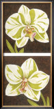 Surabaya Orchids Posters by Judy Shelby