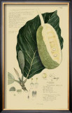 Tropical Fruits IV Posters by A. Descubes