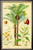 Plants Used in Clothing Prints by William Rhind