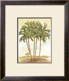 Palm Tree III Print by Bradley H. Clark