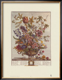 Twelve Months of Flowers, 1730, February Art by Robert Furber