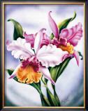 Pink Orchid Framed Giclee Print by Ted Mundorff